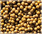 Importer Exporter Soyabean, Soyabean DOC, Soyabean Products